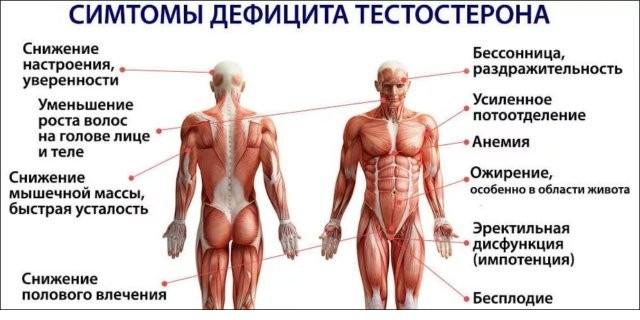 Низкий тестостерон у мужчин: причины, симптомы, лечение