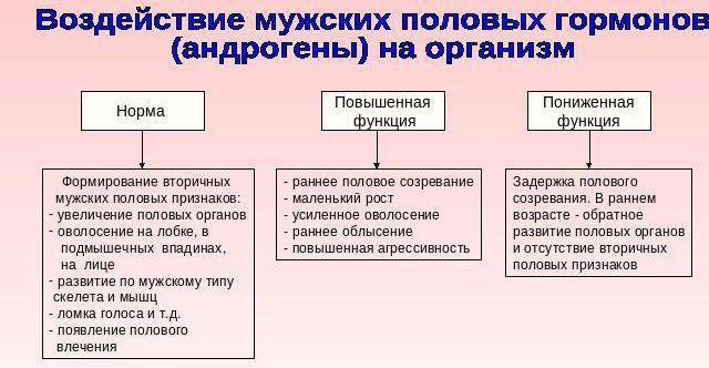 влияние адрогенов на организм