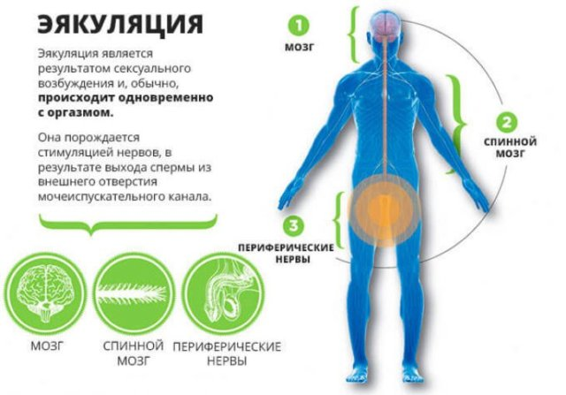 как увеличить количество семенной жидкости у мужчин