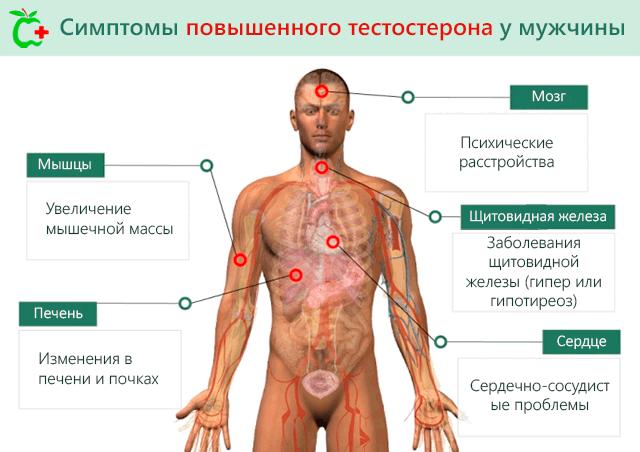Повышенный тестостерон у мужчин симптомы