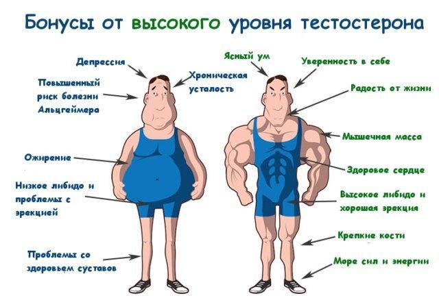 Влияние тестостерона на мужчин
