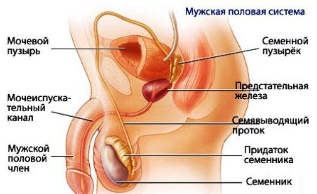 воспаление семенного канатика у мужчин