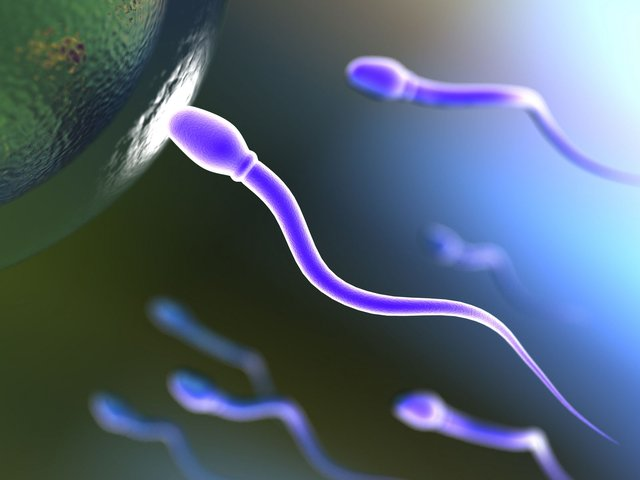 агрегация в спермограмме что это