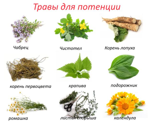травы для потенции для мужчин