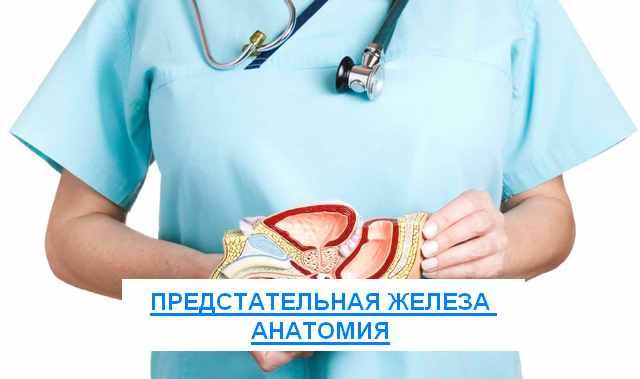 И медицина простатита небактериальный простатит лечение