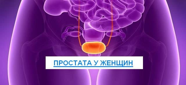 простата у женщин